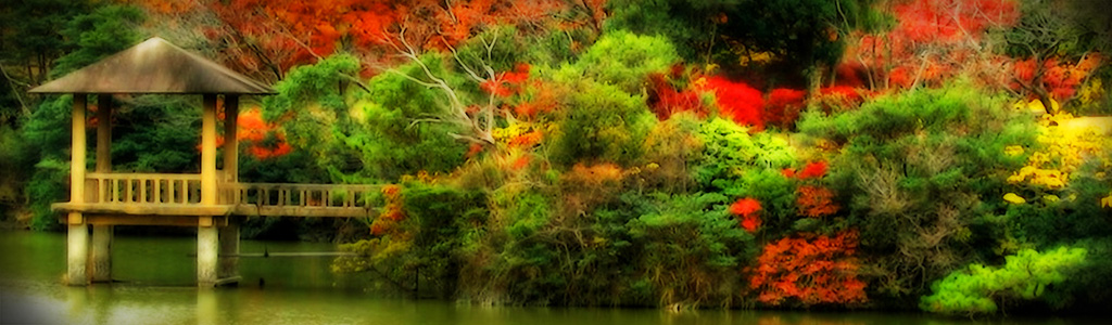 autumn-forest-website-header