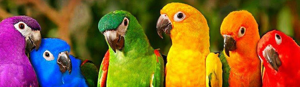amazing-colorful-birds-website-header