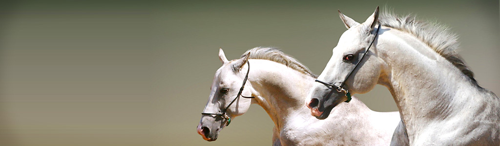 white-couple-horses-header
