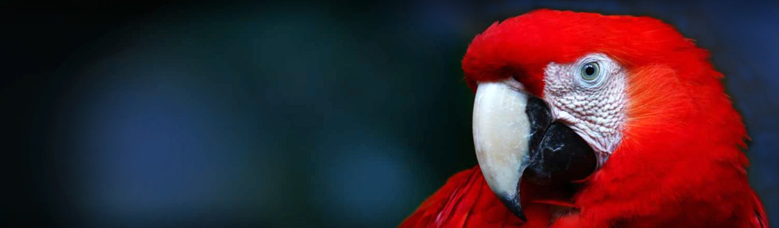 beautiful-red-macaw-bird-website-header