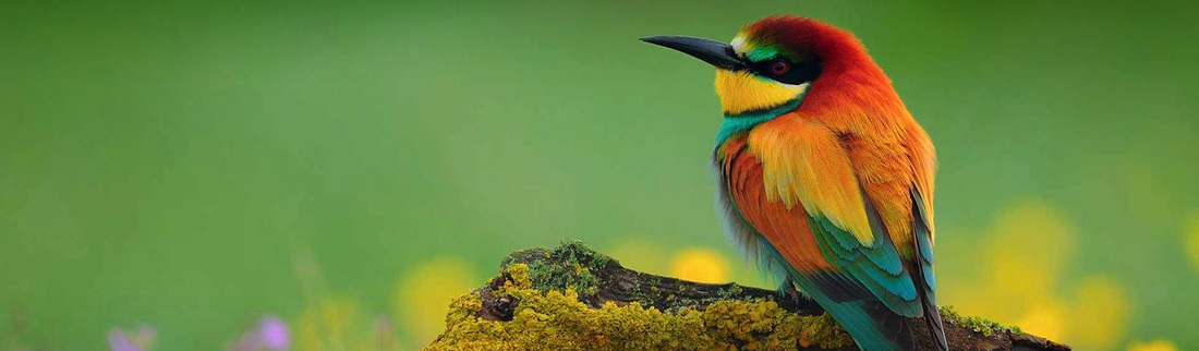 beautiful-south-african-bird-web-header