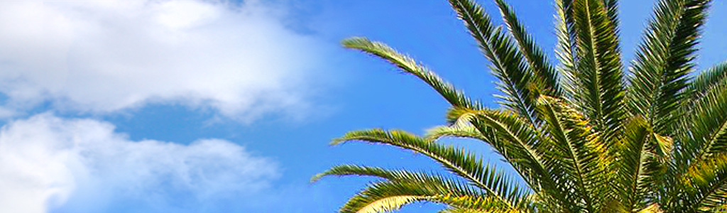 tropical-palm-and-blue-sky-website-header