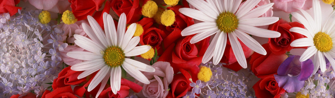 assorted-colorful-flowers-website-header