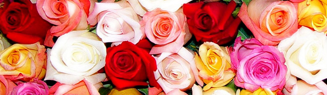 amazing-colorful-rose-flowers-website-header